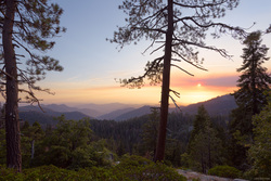 Smokey Sequoia Sundown