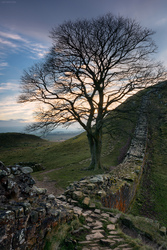 The Tree And The Wall