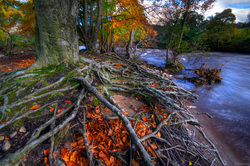 Roots In Autumn